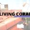 living coral cor pantone 2019 blog da tamires